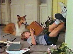 Lassie and Will